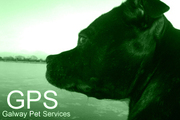 Galway Pet Services - Dog Walking