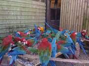 AUCTION - Exotic Birds,  Cages & More for sale