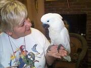 Cockatoo,  Amazons,  Macaw  Parrots